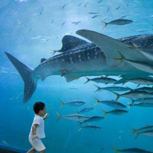 Aqua Planet Jeju Admission Ticket