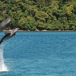 dolphin tales Ocean Adventure