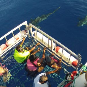 people about to dive into Oahu's waters inside a shark cage