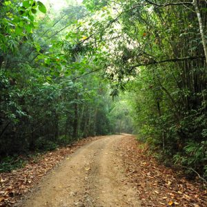 Koh Chang Jungle Trekking