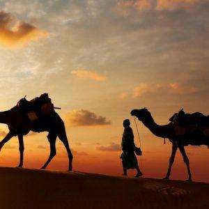 sunset camel ride pushkar, sunset camel safari in pushkar, camel riding adventure in pushkar, late afternoon camel ride in pushkar