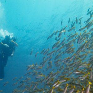 Full Day Scuba Diving Ko Lipe