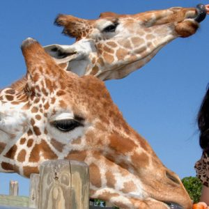 girls feeding giraffes while posing for a photo