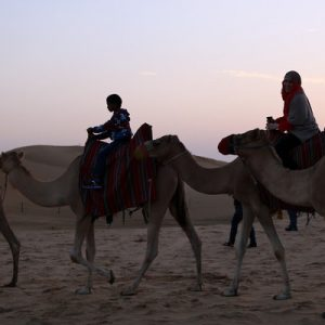 people riding camels during sunset for overnight desert safari from abu dhabi