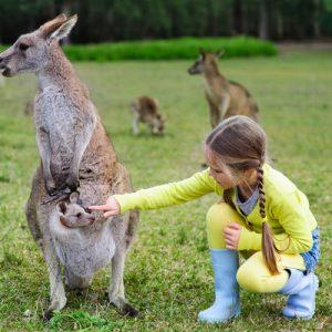 australia zoo brisbane
