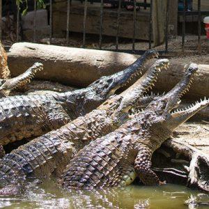hartleys crocodile adventure
