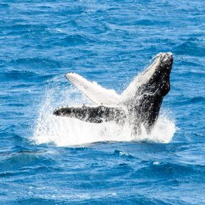 fraser island whale watching tour