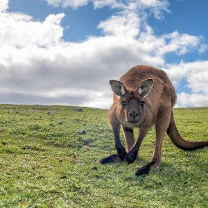 kangaroo island overnight tour