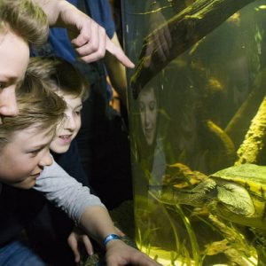 boys watching turtle in sea life munich