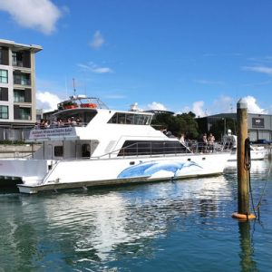 whale and dolphin watching cruise