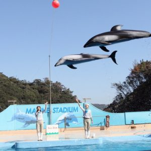 dolphin show in japan