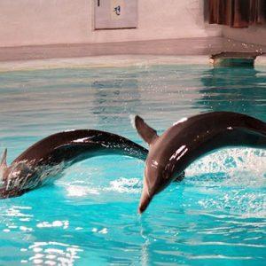 pacific land dolphin show jeju island