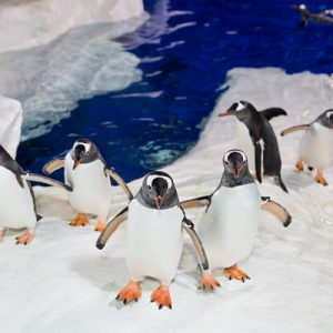penguin kingdom