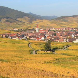 whole day wine tour in alsace, winery tours in alsace from strasbourg, whole day tour in alsace with wine tasting, winery tours in alsace, wine tours in france