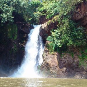 harvalem water falls with trees