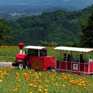 train in tottori hanakairo flower park