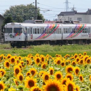 1 Day Train Pass between Matsumoto and Shin-shimashima