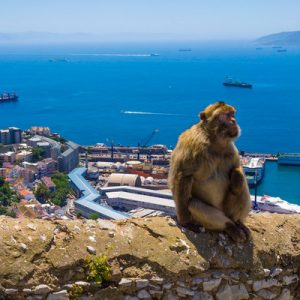 Guided Full Day Tour Gibraltar Sightseeing