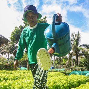 nurture farm in tagaytay
