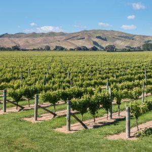 vineyards at marlborough