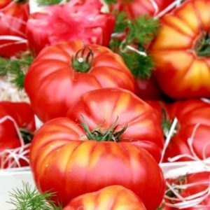 French tomatoes in the Liberation Market
