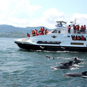 amakusa dolphin watching experience