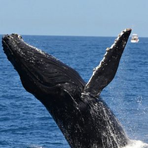 vip whale watching cruise perth