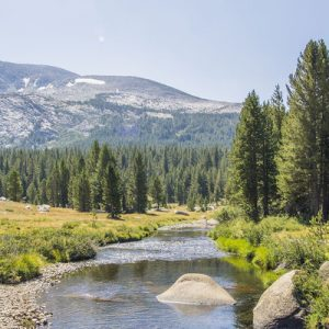 a river in between forests in Yosemite National Park
