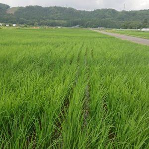 satoyama scenic area