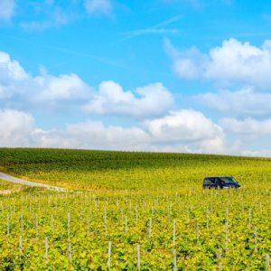 grape vineyard in France