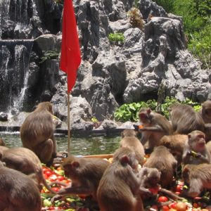 monkeys eating fruits in monkey island