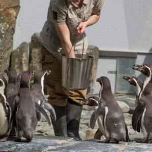 prague zoo penguins