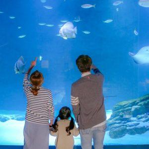 family watching fish in daegu alive aquarium