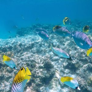 fish underwater with corals
