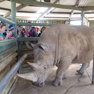 rhino interaction monarto zoo