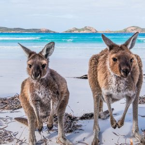 kangaroo island day tour