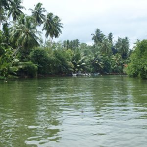 Balapitiya River Safari and Nature Tour from Colombo