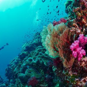 colorful corals in phuket