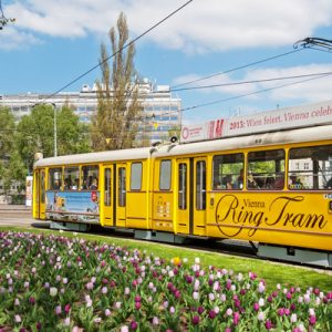 the yellow ring tram and tulips