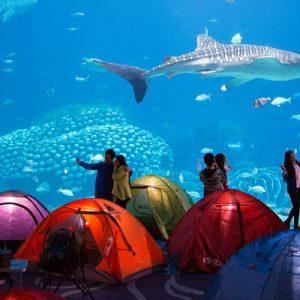 Chimelong Ocean Kingdom Sleepover