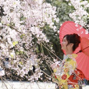 girl wearing kimono posing with cherry blossom tree