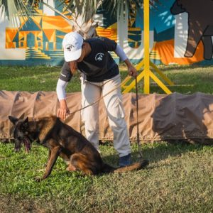 explosive detection dog show