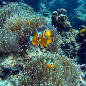 Plankton Snorkeling Eco Tour
