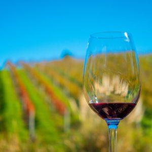 Auckland Highlights with Waiheke Island Wine Tasting