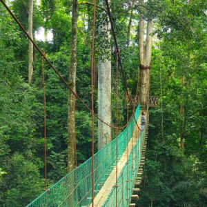 2D1N Maliau Basin Lost World Tour from Sabah