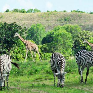 calauit game refuge and wildlife sanctuary