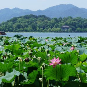 hangzhou west lake whole day tour, west lake tour in hangzhou, hangzhou west lake cruise, three pools mirroring the moon, lingying temple tour hangzhou, flying peaks hangzhou