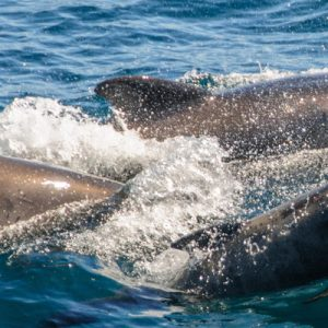 Guided Dolphin Watching