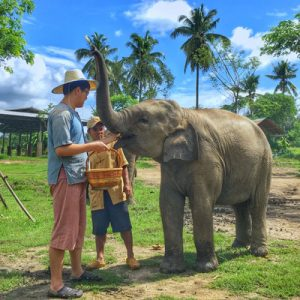 elephant sanctuary tour lanna kingdom chiang mai