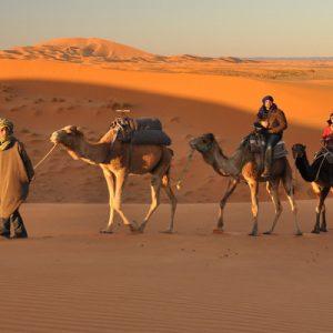 thar desert camel safari